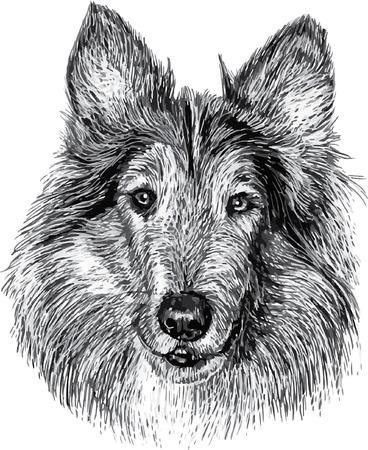 Dog head draw monochrome illustration on white background.