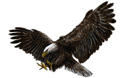 Aterrizaje de la redada del águila calva dibujar y pintar en el fondo blanco ilustración vectorial.