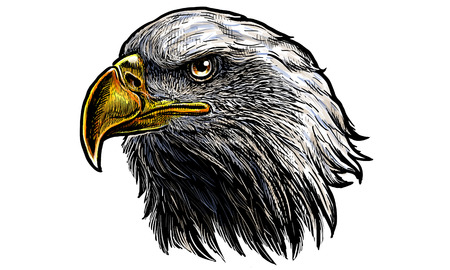 Bald eagle head hand draw and paint on white background vector illustration. Stock Illustratie