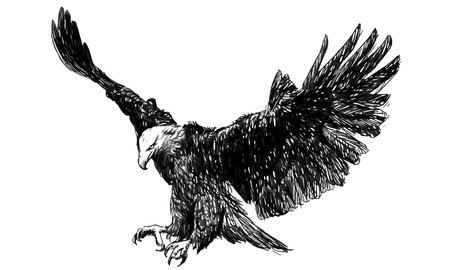 Eagle flying head draw monochrome on white background vector illustration. Illustration