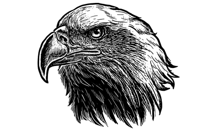 Bald eagle head hand draw monochrome on white background vector illustration. Illustration