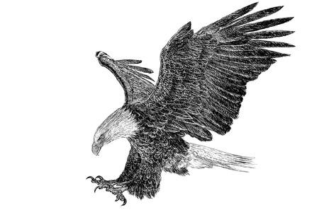 Pygargue à tête blanche swoop dessiner sur fond blanc Illustrations. Banque d'images - 47212391