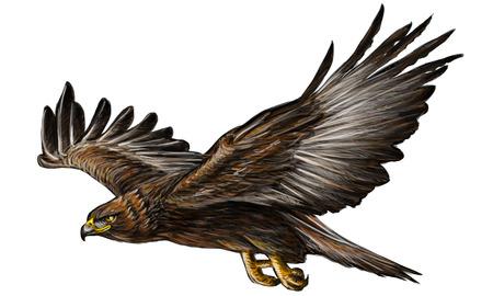 Golden eagle flying main dessiner et à peindre sur fond blanc illustration vectorielle. Vecteurs