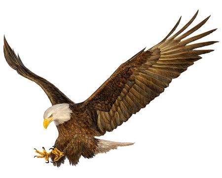 Bald Eagle klap de hand tekenen en schilderen op een witte achtergrond vector illustratie.
