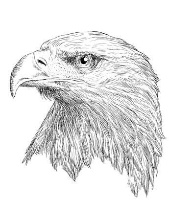 bale: Bale eagle head hand draw monochrome on white background
