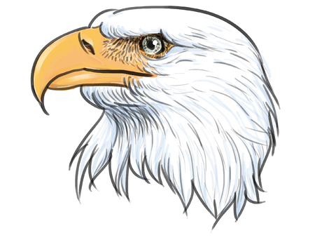 bald eagle: Head bald eagle hand draw and paint on white background