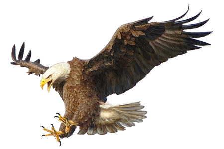 Eagle bird flying attack  on white background illustration. Illustration