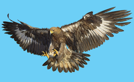 Golden eagle landing  on blue background illustration. Stock Photo