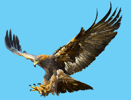 Golden eagle flying swoop  and paint color on blue background illustration.
