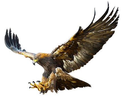 Golden eagle flying swoop and paint color on white background illustration.