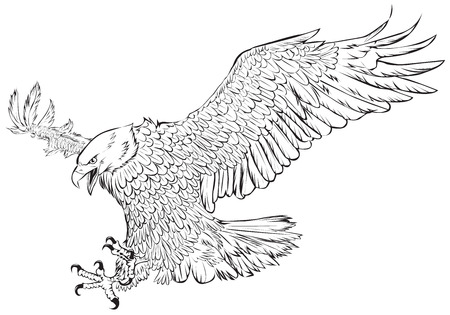 Bald eagle swoop hand draw monochrome on white background vector illustration.