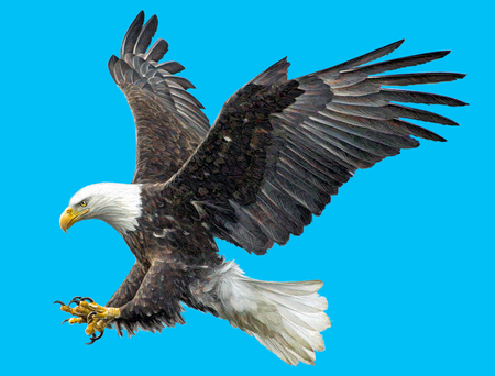 Bald eagle fly landing hand draw and paint on blue background illustration.