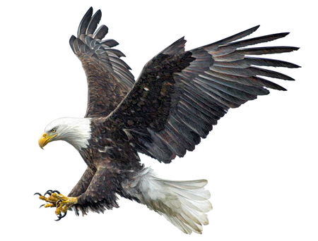 De kale adelaarsvlieg het landen hand trekt en schildert op witte illustratie als achtergrond.