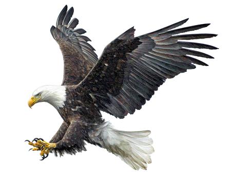 Dibujo y pintura de la mano de aterrizaje de la mosca del águila calva en el ejemplo blanco del fondo.