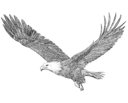 De kale adelaars vliegende hand trekt schets zwarte lijn op witte illustratie als achtergrond.