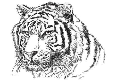 Tiger head hand draw sketch black line on white background vector illustration. Stock Illustratie