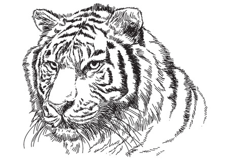 Tiger head hand draw sketch black line on white background vector illustration. Ilustração