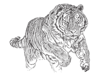 Tiger attack hand draw sketch black line monochrome vector illustration.