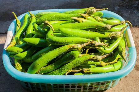 Color of natural green fresh natural skin of eggplant