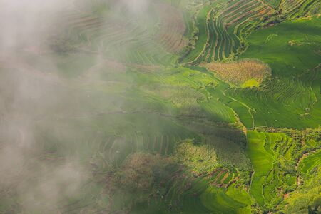 Green of rice terrace on hill of mountain  located at SAPA Vietnam