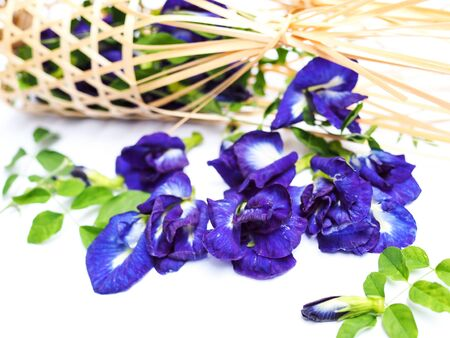 plant in nature is herb with butterfly pea isolated on white background.