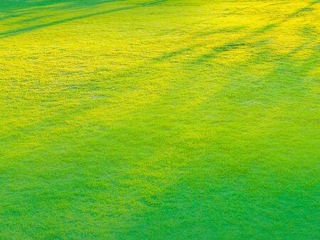 Green lawn with color effects with abstract background.