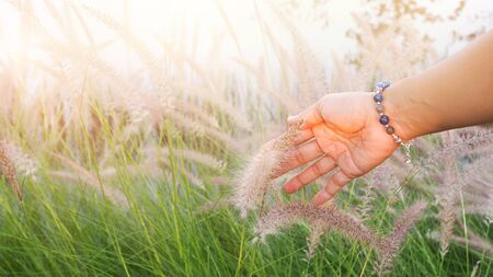 happy life with hand of adult thai woman touching soft flower grass in garden.