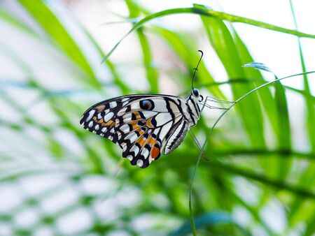 Fresh environment with butterflies flying on green leaves. Stok Fotoğraf