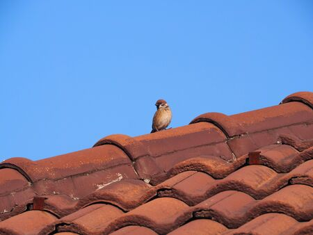 Top on roof of house built with concrete roofing tiles.