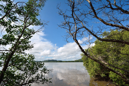 mangrove forest with blue sky. photo