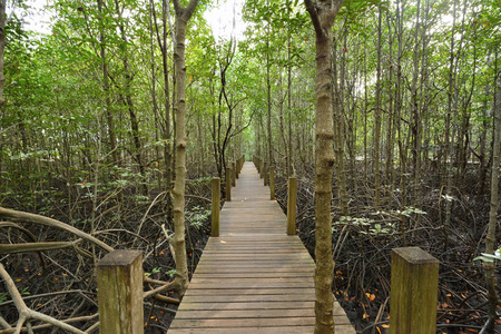 mangrove forest. photo