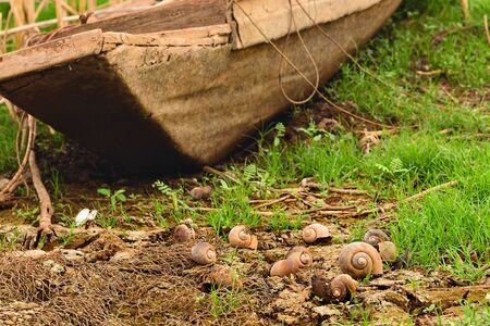 shell snail on the dry ground is a result of drought