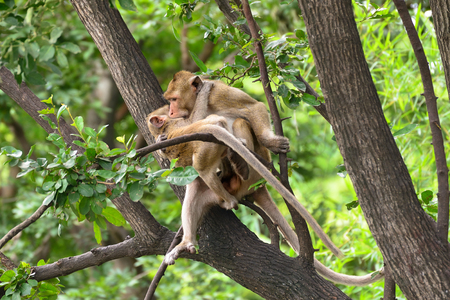 Brown monkey are teasing on tree.