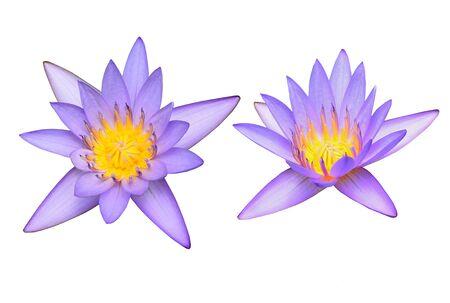 Lotus Blumen Auf Weißen Hintergrund Lizenzfreie Fotos, Bilder Und ...