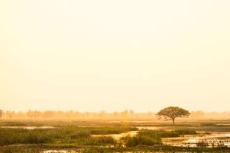 Big tree and marsh in beautiful morning