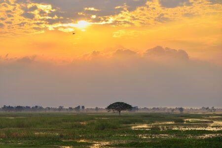 Big tree in marsh and beautiful cloud sky