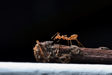 Ant on dark background Stock Photo
