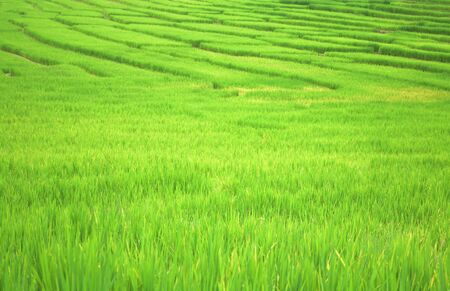 le vert des champs