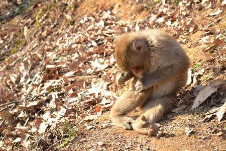 a baby monkey Foto de archivo