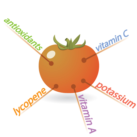 Tomato Content Properties and Benefits Illustration