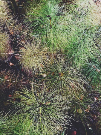 equisetum: horsetail top view in the autumn forest Stock Photo