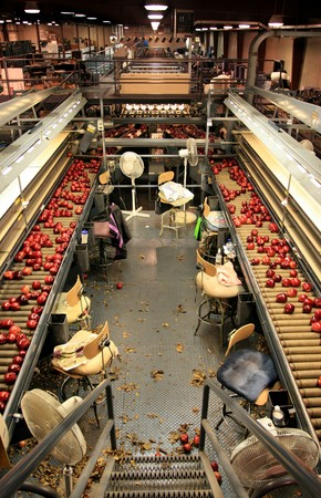 Deliciosas manzanas rojas en línea de tablas de clasificación Foto de archivo - 4321181