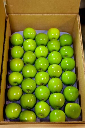 apples lined up on a tray in a box