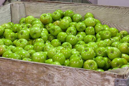 cull:  apples in a cull bin