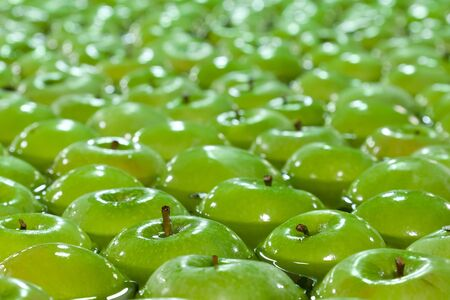 Granny Smith apples floating in tank in a warehouse
