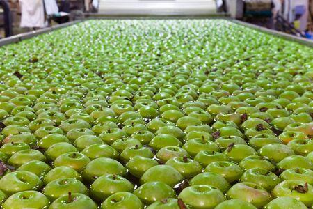 transportador: manzanas que flotan en el tanque