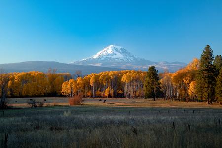 Monte Adams atardecer con álamos otoñales