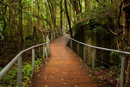 Raised walkway in rainforest floor near Katoomba in New South Wales, Australia near Syndey