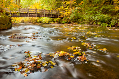 Autumn leaves in South Fork Silver Creek and wooden bridge in background