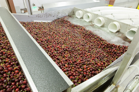 Red ripe cherries being washing in a fruit packing warehouse in Washington state Stock Photo